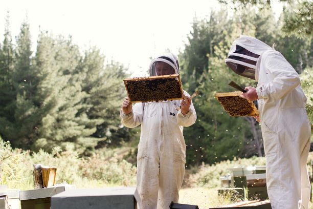 A day in the life of a Mountain Valley Honey Beekeeper